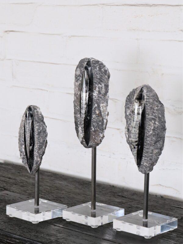 Orthoceras Fossil on Acrylic Base